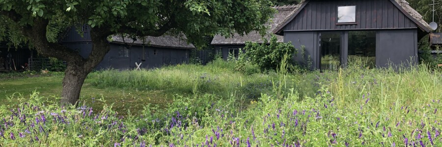 Landskabet, billebanker og fodertræer